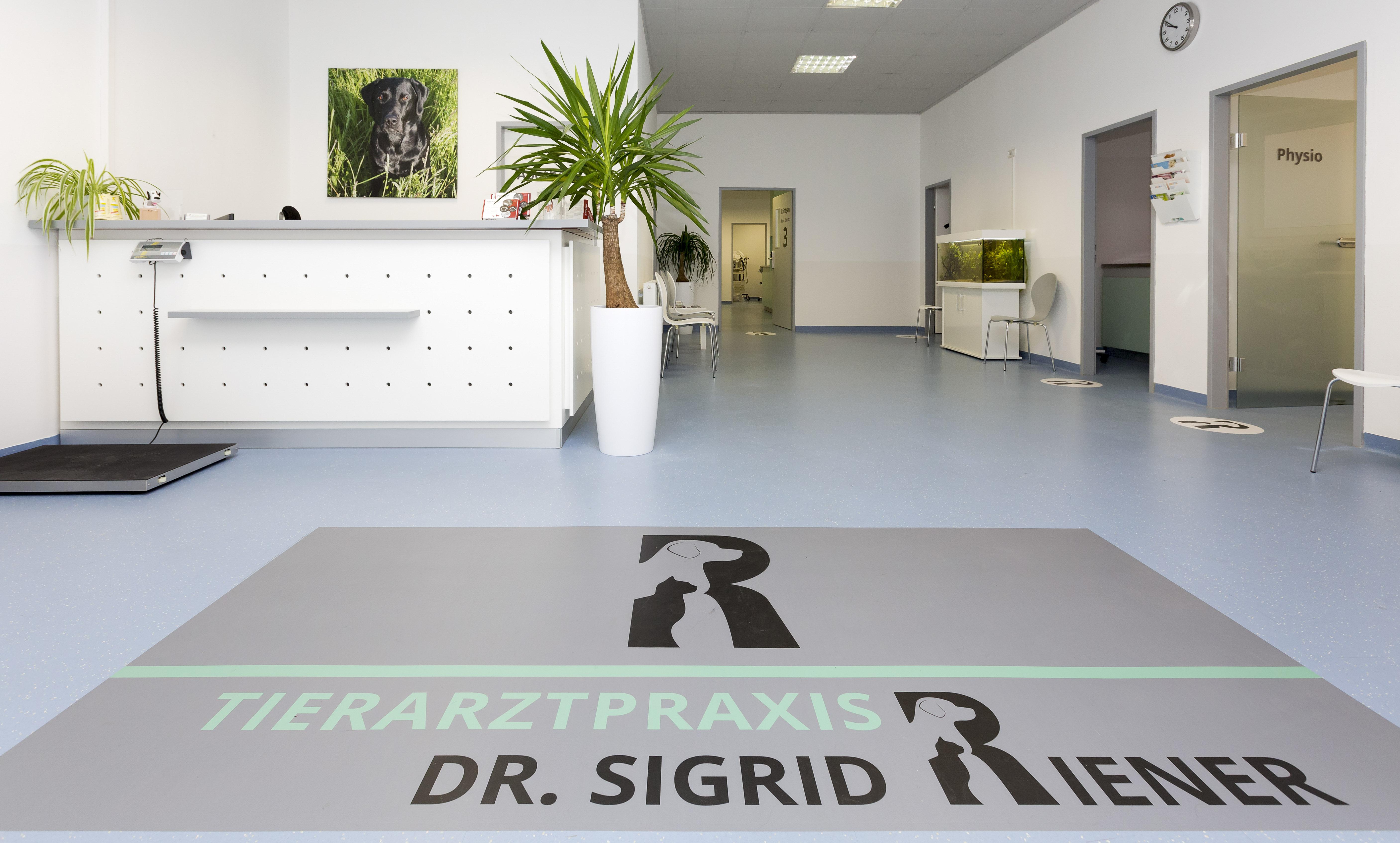 Beruhigende Ordinationsräume der Praxis - Tierarztpraxis Dr. Sigrid Riener