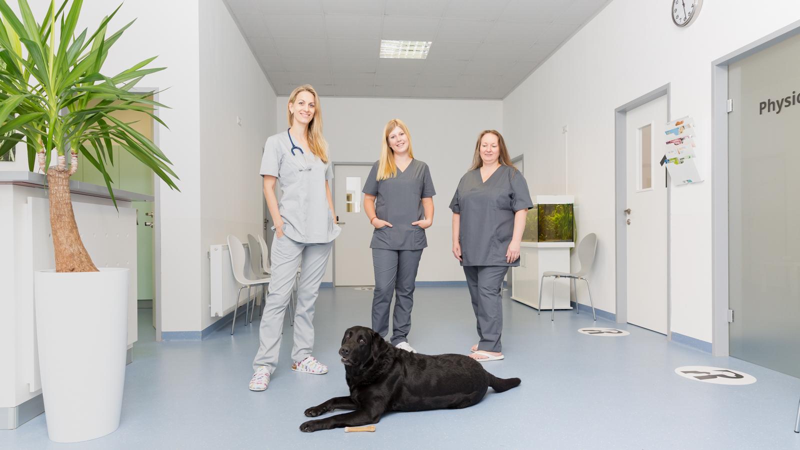 Vorstellung der Praxis für Sie und Ihr Tier - Tierarztpraxis Dr. Sigrid Riener