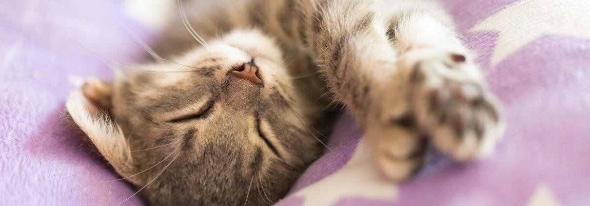 Tieren die Silvester Angst nehmen Aktuelles - Tierarztpraxis Dr. Sigrid Riener