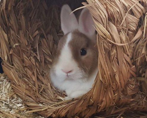 Impfungen für Kaninchen Aktuelles - Tierärztin Dr. Sigrid Riener