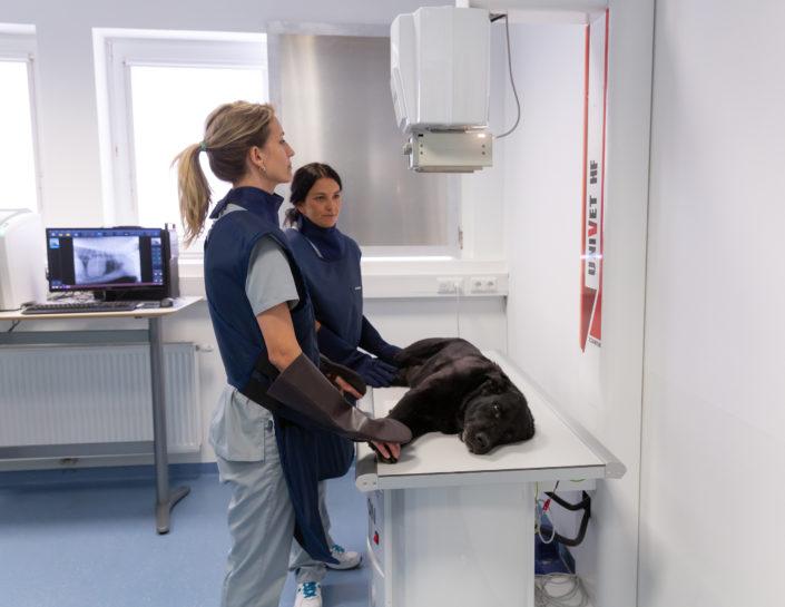 Tierarzt Notdienst, Notfall beim Tier - Tierarztpraxis Dr. Sigrid Riener